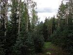 Colorado Real estate - Property in CRIPPLE CREEK,CO