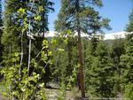 Colorado Real estate - Property in BRECKENRIDGE,CO
